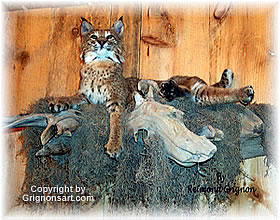 Bobcat Taxidermy by Reimond Grignon