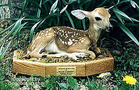 baby deer Taxidermy by Reimond Grignon