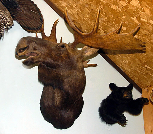 Grignons Artistic Taxidermy